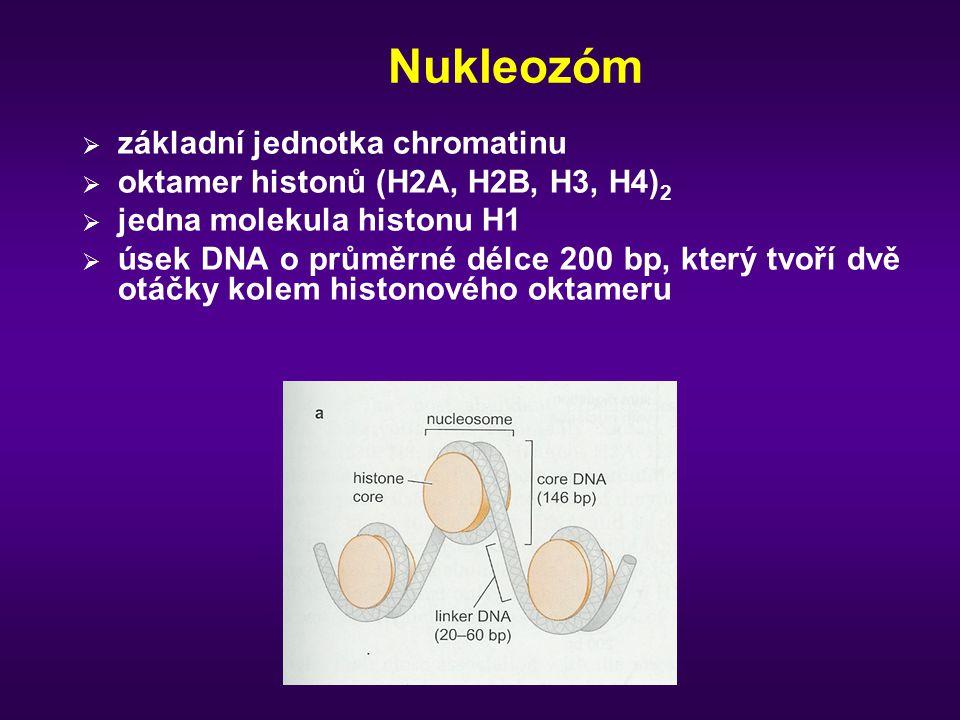 Nukleozóm  základní jednotka chromatinu  oktamer histonů (H2A, H2B, H3, H4) 2  jedna molekula histonu H1  úsek DNA o průměrné délce 200 bp, který tvoří dvě otáčky kolem histonového oktameru