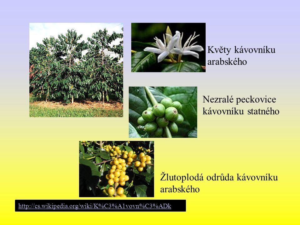 Květy kávovníku arabského Nezralé peckovice kávovníku statného Žlutoplodá odrůda kávovníku arabského http://cs.wikipedia.org/wiki/K%C3%A1vovn%C3%ADk