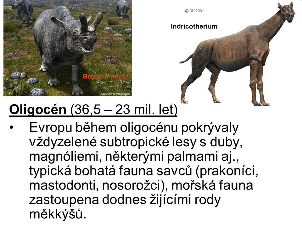 Oligocén (36,5 – 23 mil. let) Evropu během oligocénu pokrývaly vždyzelené subtropické lesy s duby, magnóliemi, některými palmami aj., typická bohatá f