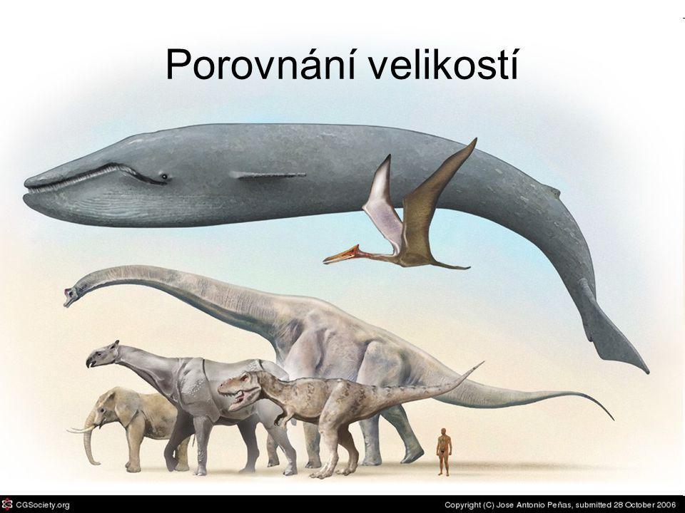 Miocén (23 – 4,8 mil.