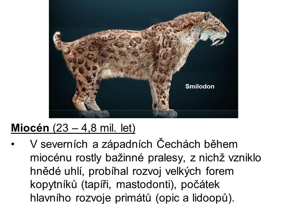 Miocén (23 – 4,8 mil. let) V severních a západních Čechách během miocénu rostly bažinné pralesy, z nichž vzniklo hnědé uhlí, probíhal rozvoj velkých f