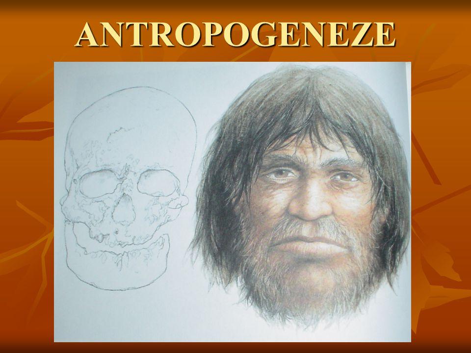 Homo erectus - technologie Kultura: acheuléen (pěstní klíny užívané pro lov a vyhrabávání hlíz) Kultura: acheuléen (pěstní klíny užívané pro lov a vyhrabávání hlíz)