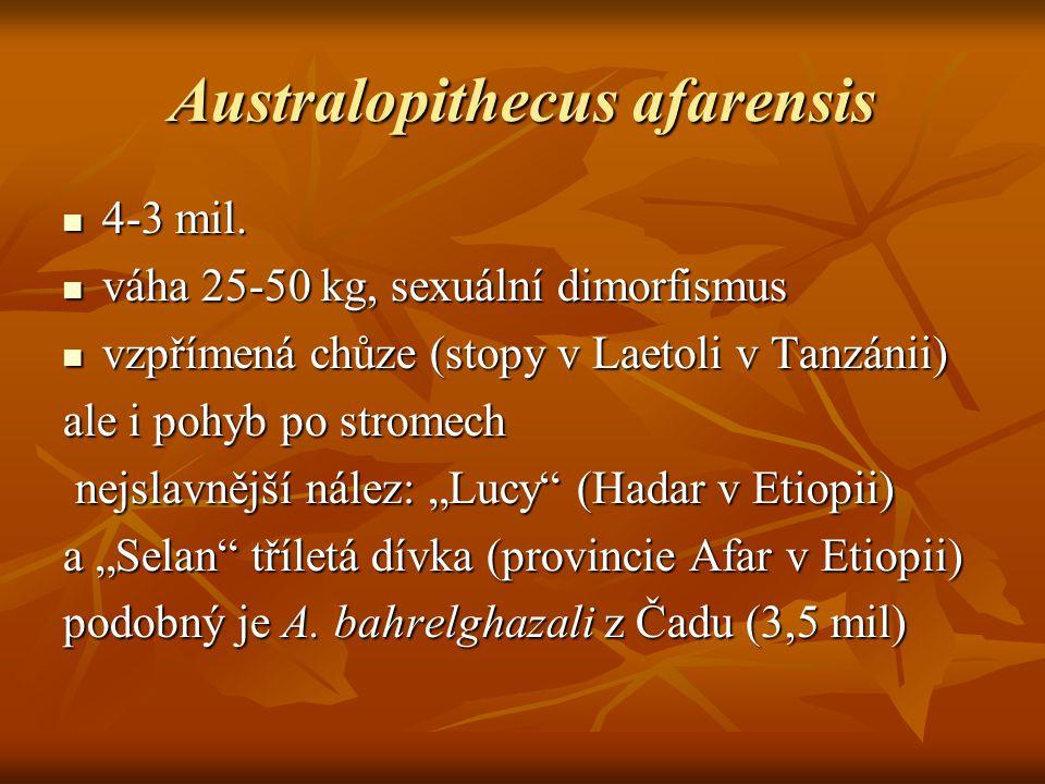 Australopithecus afarensis 4-3 mil.4-3 mil.