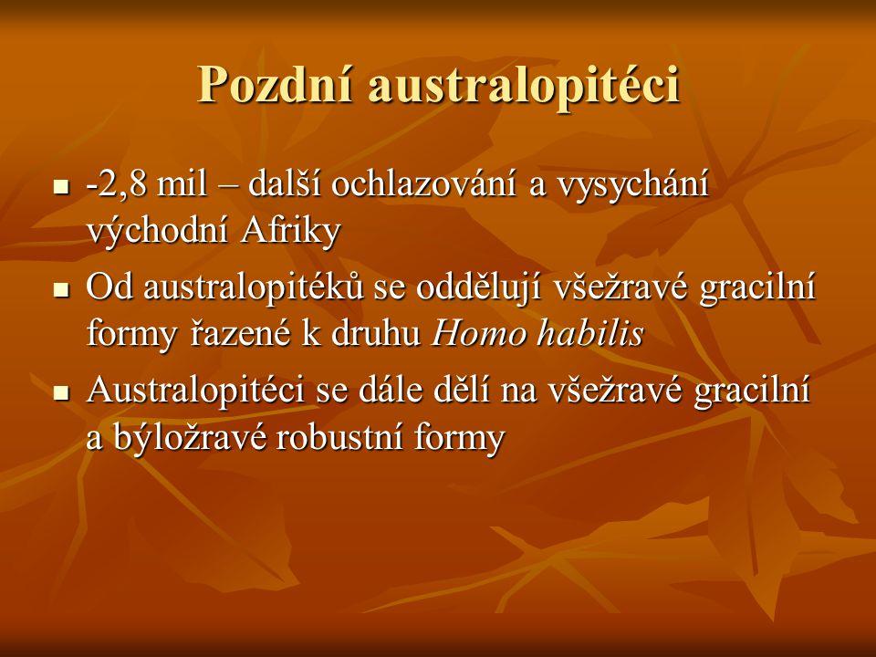Pozdní australopitéci -2,8 mil – další ochlazování a vysychání východní Afriky -2,8 mil – další ochlazování a vysychání východní Afriky Od australopitéků se oddělují všežravé gracilní formy řazené k druhu Homo habilis Od australopitéků se oddělují všežravé gracilní formy řazené k druhu Homo habilis Australopitéci se dále dělí na všežravé gracilní a býložravé robustní formy Australopitéci se dále dělí na všežravé gracilní a býložravé robustní formy