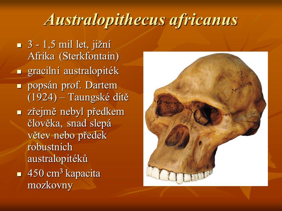 Australopithecus africanus 3 - 1,5 mil let, jižní Afrika (Sterkfontain) 3 - 1,5 mil let, jižní Afrika (Sterkfontain) gracilní australopiték gracilní australopiték popsán prof.