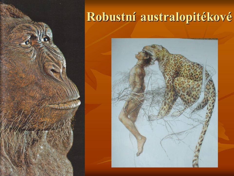 Robustní australopitékové