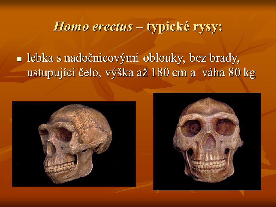 Homo erectus – typické rysy: lebka s nadočnicovými oblouky, bez brady, ustupující čelo, výška až 180 cm a váha 80 kg lebka s nadočnicovými oblouky, bez brady, ustupující čelo, výška až 180 cm a váha 80 kg