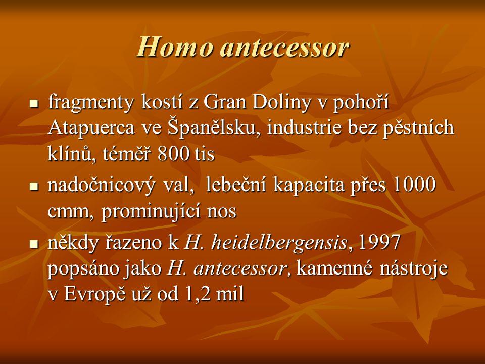 Homo antecessor fragmenty kostí z Gran Doliny v pohoří Atapuerca ve Španělsku, industrie bez pěstních klínů, téměř 800 tis fragmenty kostí z Gran Doliny v pohoří Atapuerca ve Španělsku, industrie bez pěstních klínů, téměř 800 tis nadočnicový val, lebeční kapacita přes 1000 cmm, prominující nos nadočnicový val, lebeční kapacita přes 1000 cmm, prominující nos někdy řazeno k H.