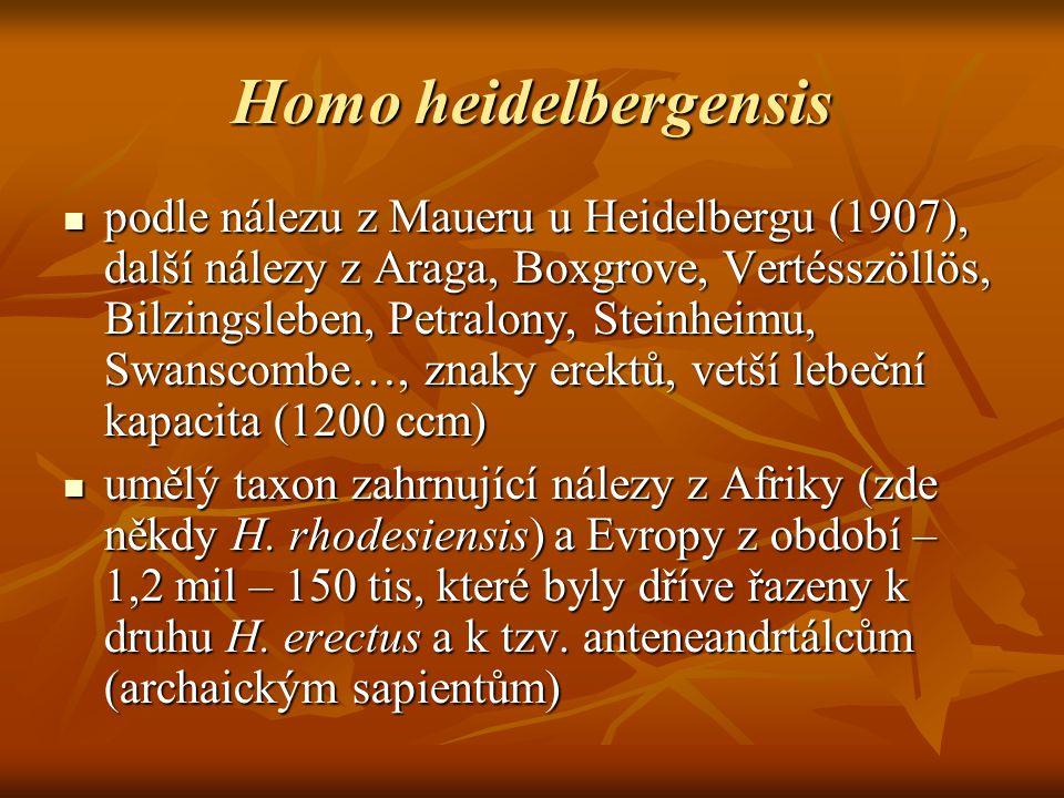 Homo heidelbergensis podle nálezu z Maueru u Heidelbergu (1907), další nálezy z Araga, Boxgrove, Vertésszöllös, Bilzingsleben, Petralony, Steinheimu, Swanscombe…, znaky erektů, vetší lebeční kapacita (1200 ccm) podle nálezu z Maueru u Heidelbergu (1907), další nálezy z Araga, Boxgrove, Vertésszöllös, Bilzingsleben, Petralony, Steinheimu, Swanscombe…, znaky erektů, vetší lebeční kapacita (1200 ccm) umělý taxon zahrnující nálezy z Afriky (zde někdy H.