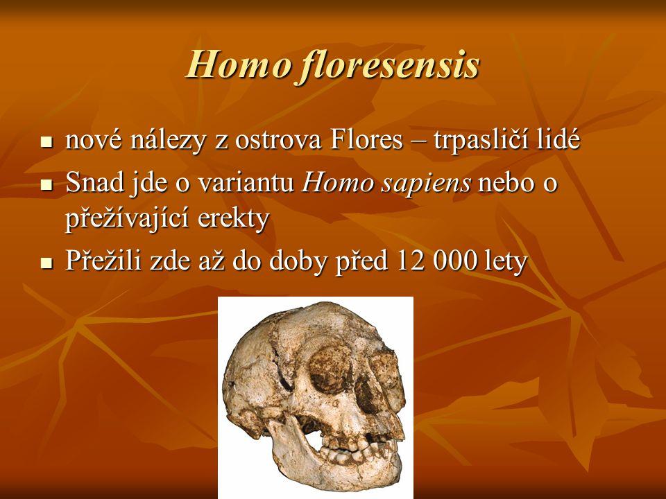 Homo floresensis nové nálezy z ostrova Flores – trpasličí lidé nové nálezy z ostrova Flores – trpasličí lidé Snad jde o variantu Homo sapiens nebo o přežívající erekty Snad jde o variantu Homo sapiens nebo o přežívající erekty Přežili zde až do doby před 12 000 lety Přežili zde až do doby před 12 000 lety