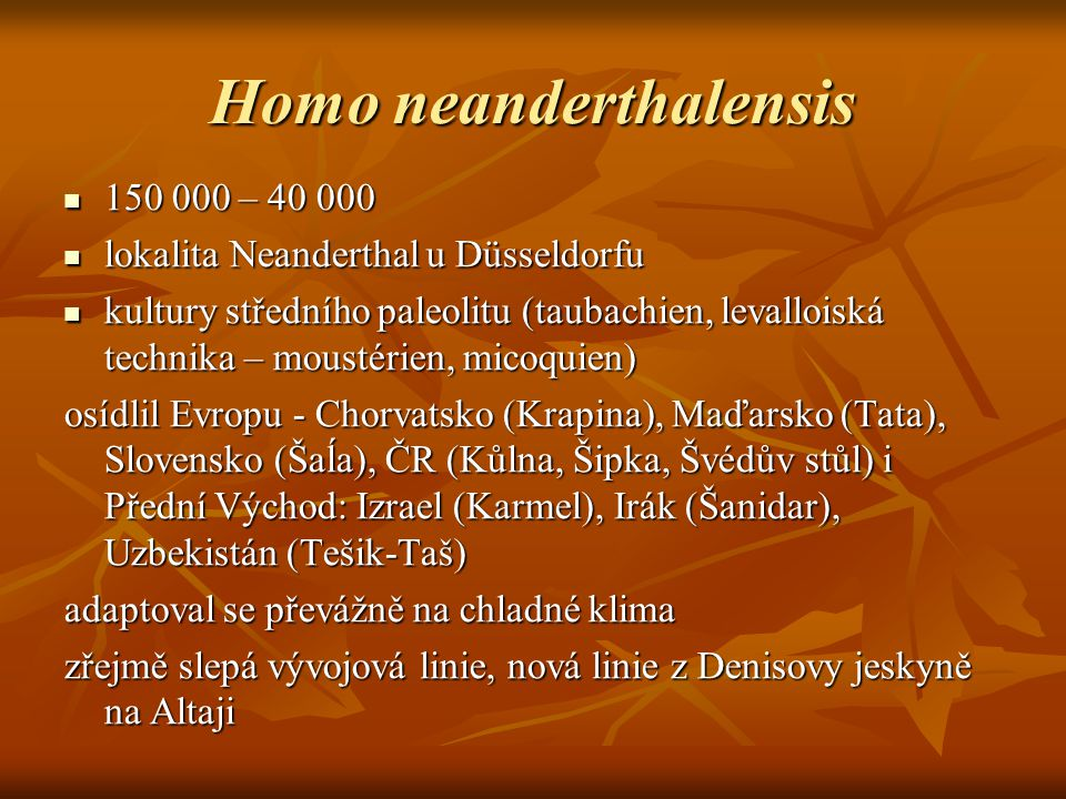 Homo neanderthalensis 150 000 – 40 000 150 000 – 40 000 lokalita Neanderthal u Düsseldorfu lokalita Neanderthal u Düsseldorfu kultury středního paleolitu (taubachien, levalloiská technika – moustérien, micoquien) kultury středního paleolitu (taubachien, levalloiská technika – moustérien, micoquien) osídlil Evropu - Chorvatsko (Krapina), Maďarsko (Tata), Slovensko (Šaĺa), ČR (Kůlna, Šipka, Švédův stůl) i Přední Východ: Izrael (Karmel), Irák (Šanidar), Uzbekistán (Tešik-Taš) adaptoval se převážně na chladné klima zřejmě slepá vývojová linie, nová linie z Denisovy jeskyně na Altaji