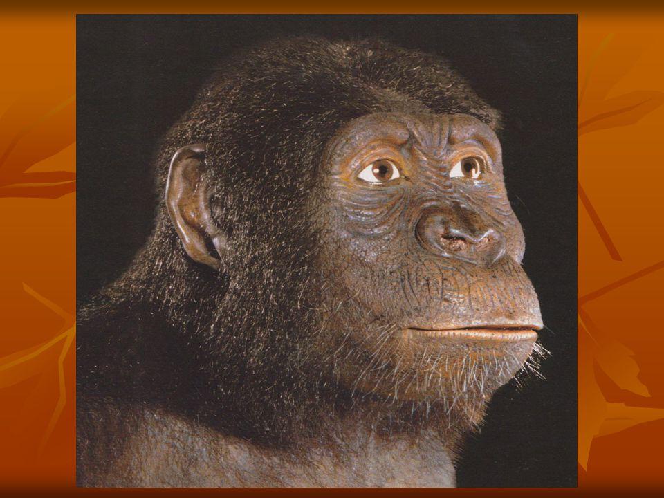 Homo sapiens moderní lidé existovali v Africe dlouho předtím, než se objevili v Evropě (-150 000 let) moderní lidé existovali v Africe dlouho předtím, než se objevili v Evropě (-150 000 let) vyvinuli se v jižní nebo východní Africe z Homo heidelbergensis vyvinuli se v jižní nebo východní Africe z Homo heidelbergensis nejstarší Africké lokality: Klasies River Mouth (JAR), jeskyně Border (JAR), Omo-Kibiš (Etiopie) – datovaná 130 000, Blombos (JAR), Irhoud (Maroko), aterien...