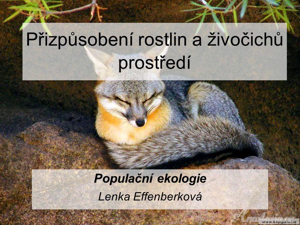 Přizpůsobení rostlin a živočichů prostředí Populační ekologie Lenka Effenberková