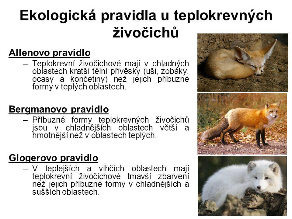 Ekologická pravidla u teplokrevných živočichů Allenovo pravidlo –Teplokrevní živočichové mají v chladných oblastech kratší tělní přívěsky (uši, zobáky