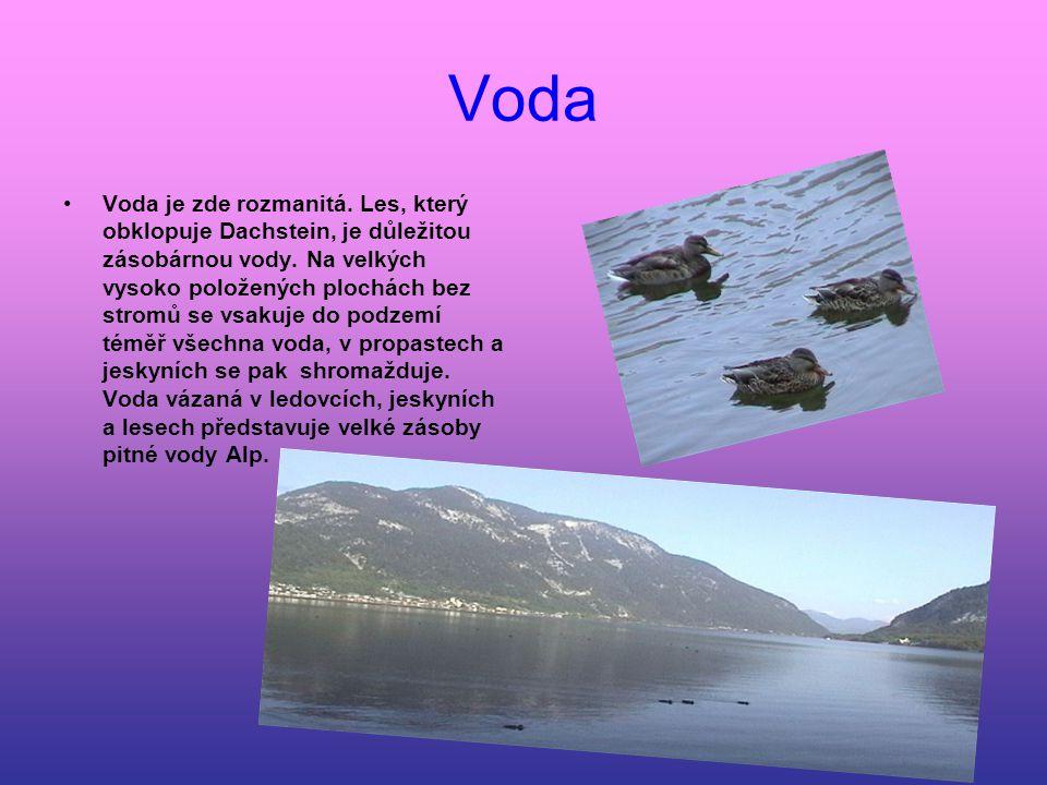 Voda Voda je zde rozmanitá. Les, který obklopuje Dachstein, je důležitou zásobárnou vody. Na velkých vysoko položených plochách bez stromů se vsakuje