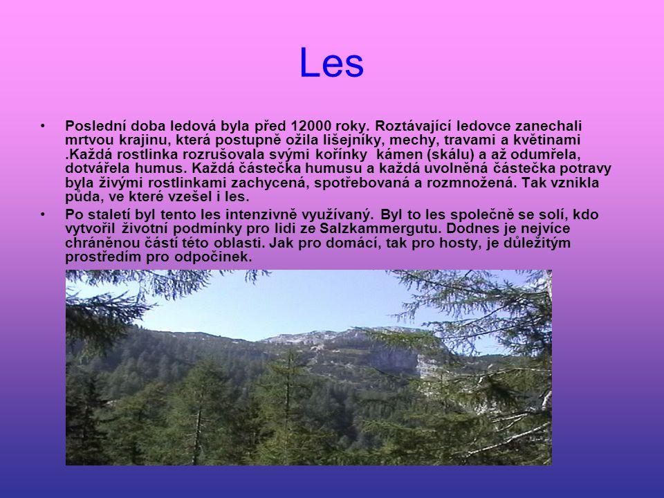 Voda Voda je zde rozmanitá.Les, který obklopuje Dachstein, je důležitou zásobárnou vody.