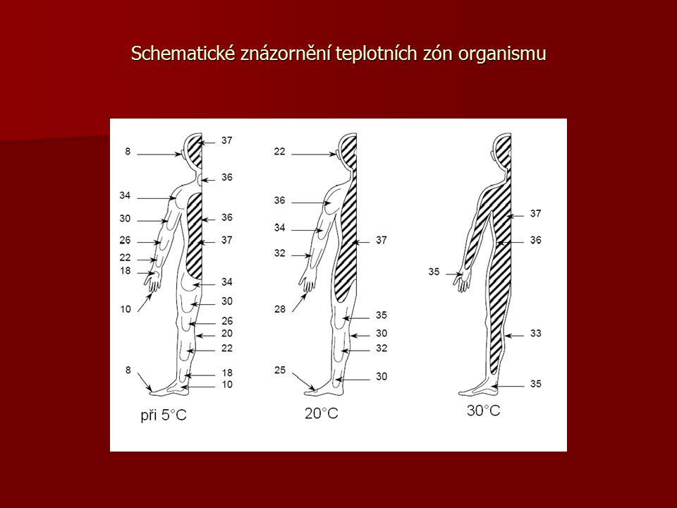 Horečka Zvýšená tělesná teplota (nad 38 °C) Zvýšená tělesná teplota (nad 38 °C) obranná reakce organismu na působení cizorodé látky obranná reakce organismu na působení cizorodé látky Nejčastější nespecifický příznak onemocnění Nejčastější nespecifický příznak onemocnění Způsobena: bakteriálními i virovými onemocněními, přítomností parazitů Způsobena: bakteriálními i virovými onemocněními, přítomností parazitů Nejčastěji provází : chřipku, angínu, příušnice, zánět mozkových blan, nejrůznější infekce a záněty, úpal a úžeh Nejčastěji provází : chřipku, angínu, příušnice, zánět mozkových blan, nejrůznější infekce a záněty, úpal a úžeh