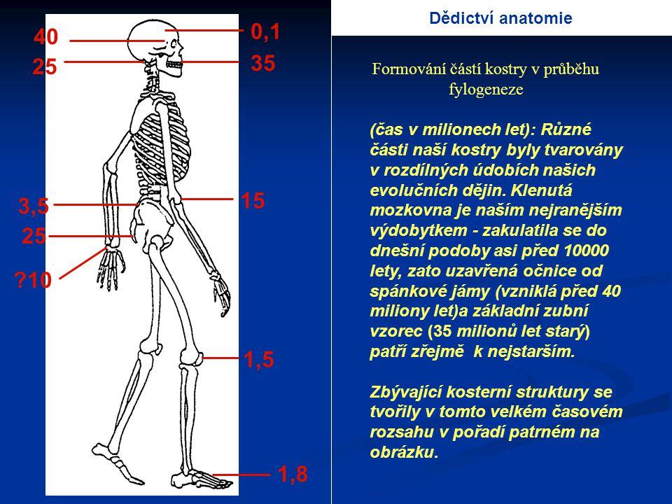 40 25 3,5 25 ?10 0,1 35 15 1,5 1,8 (čas v milionech let): Různé části naší kostry byly tvarovány v rozdílných údobích našich evolučních dějin. Klenutá