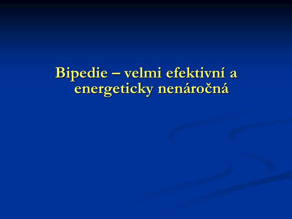 Bipedie – velmi efektivní a energeticky nenáročná