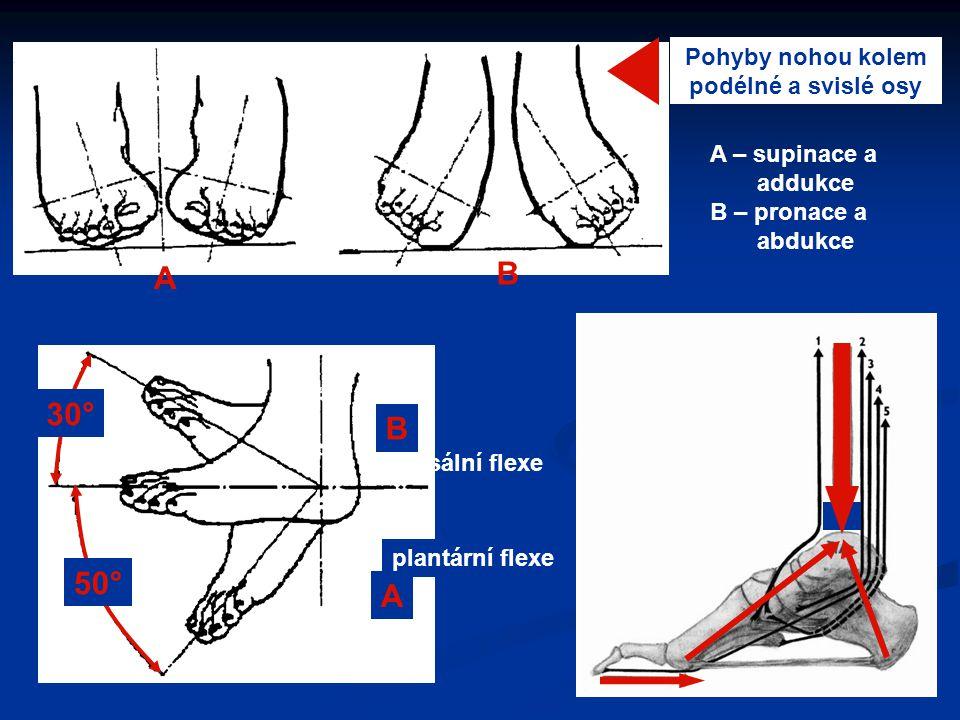 Pohyby nohou kolem podélné a svislé osy A – supinace a addukce B – pronace a abdukce A B dorsální flexe plantární flexe 30° 50° B A