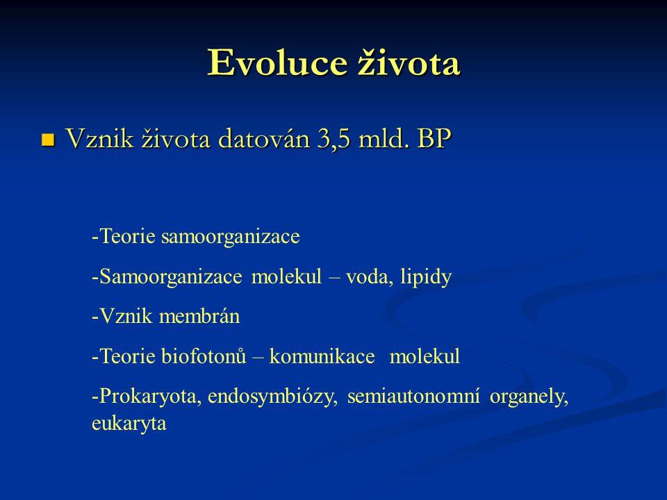Evoluce života Vznik života datován 3,5 mld. BP Vznik života datován 3,5 mld. BP -Teorie samoorganizace -Samoorganizace molekul – voda, lipidy -Vznik