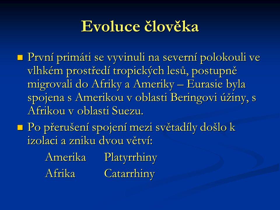 Evoluce člověka První primáti se vyvinuli na severní polokouli ve vlhkém prostředí tropických lesů, postupně migrovali do Afriky a Ameriky – Eurasie b