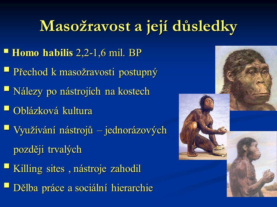 Masožravost a její důsledky Homo habilis 2,2-1,6 mil. BP  Homo habilis 2,2-1,6 mil. BP  Přechod k masožravosti postupný  Nálezy po nástrojích na ko