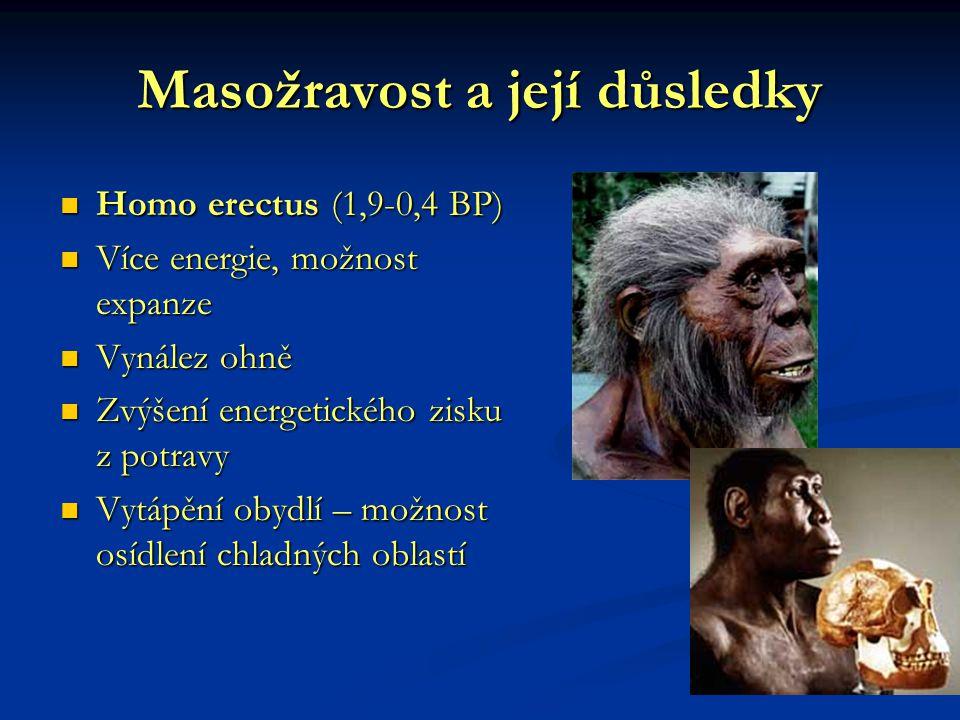 Masožravost a její důsledky Homo erectus (1,9-0,4 BP) Více energie, možnost expanze Vynález ohně Zvýšení energetického zisku z potravy Vytápění obydlí