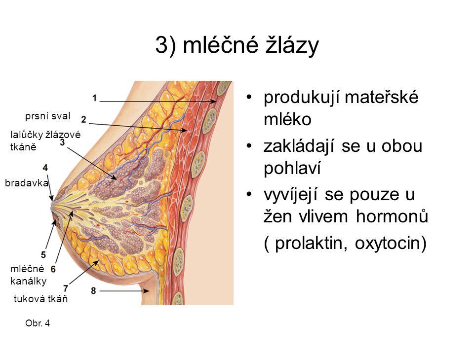 3) mléčné žlázy produkují mateřské mléko zakládají se u obou pohlaví vyvíjejí se pouze u žen vlivem hormonů ( prolaktin, oxytocin) prsní sval tuková t