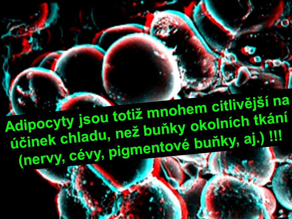 Adipocyty jsou totiž mnohem citlivější na účinek chladu, než buňky okolních tkání (nervy, cévy, pigmentové buňky, aj.) !!!