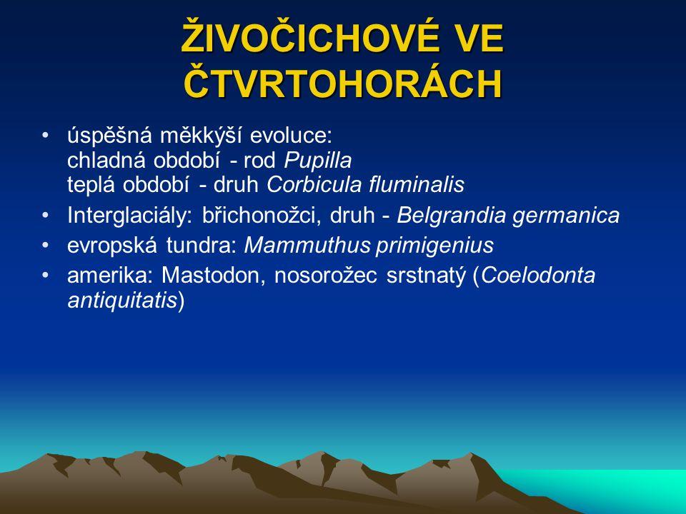 ŽIVOČICHOVÉ VE ČTVRTOHORÁCH úspěšná měkkýší evoluce: chladná období - rod Pupilla teplá období - druh Corbicula fluminalis Interglaciály: břichonožci,