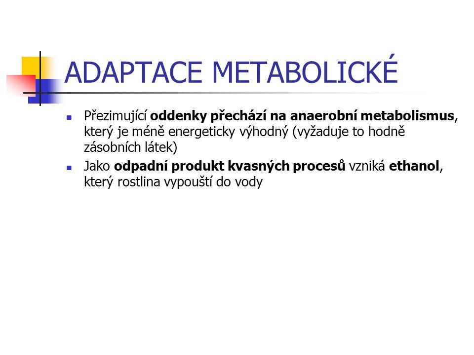 ADAPTACE METABOLICKÉ Přezimující oddenky přechází na anaerobní metabolismus, který je méně energeticky výhodný (vyžaduje to hodně zásobních látek) Jako odpadní produkt kvasných procesů vzniká ethanol, který rostlina vypouští do vody