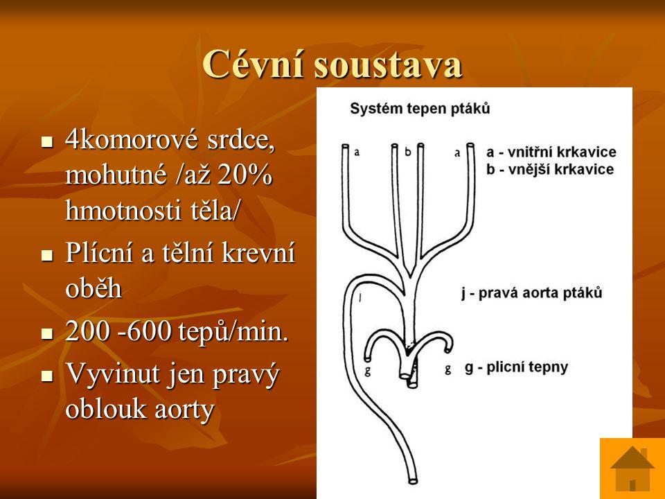 Vylučovací soustava Vylučovací soustava Pravé ledviny uloženy v pánevní oblasti Pravé ledviny uloženy v pánevní oblasti Moč hustá – odvádění dusíkatých zplodin, tvoří bělavý povlak na kašovitém trusu Moč hustá – odvádění dusíkatých zplodin, tvoří bělavý povlak na kašovitém trusu Moč jde do kloaky / není močový měchýř/ Moč jde do kloaky / není močový měchýř/