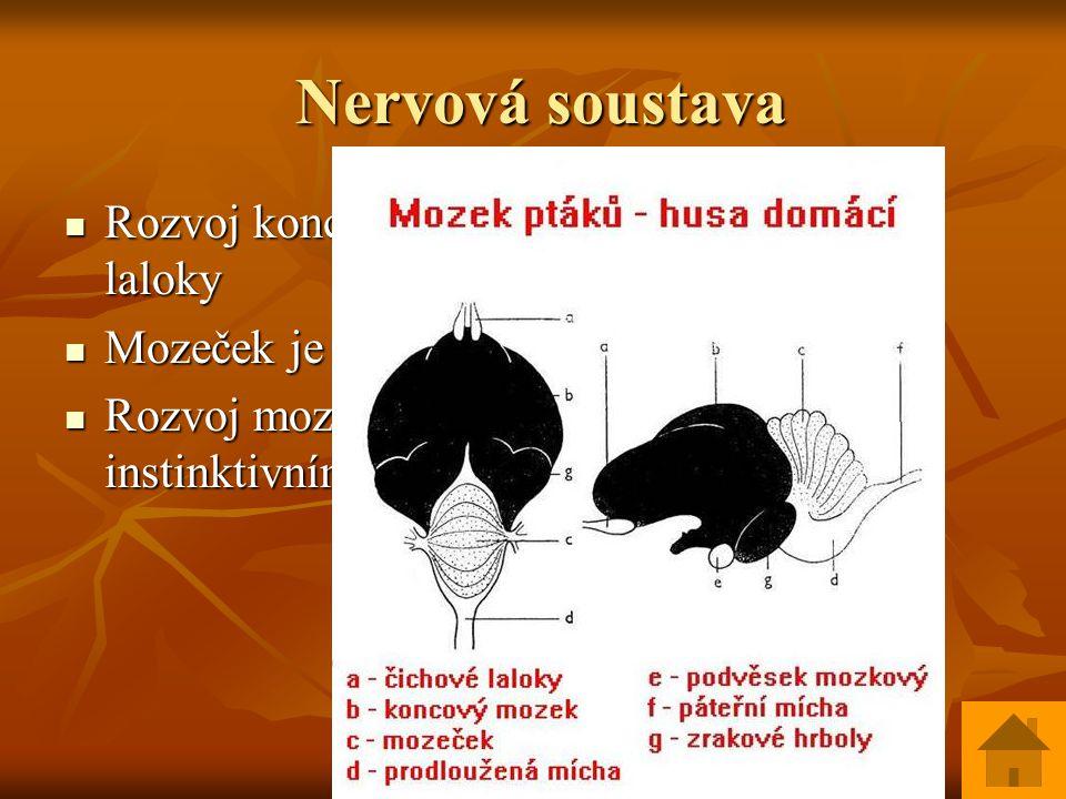 Smysly Smysly Zrak – nejlepší z obratlovců, oči se pohybují nezávisle na sobě, hřebínek ve sklivci, akomodace Zrak – nejlepší z obratlovců, oči se pohybují nezávisle na sobě, hřebínek ve sklivci, akomodace Sluch – dobrý hlavně u sov, 1 kůstka ve středním uchu Sluch – dobrý hlavně u sov, 1 kůstka ve středním uchu Statokinetické ústrojí Statokinetické ústrojí Čich slabý / vyjma kivi/ Čich slabý / vyjma kivi/ Chuť slabá Chuť slabá Hmat na opeřených místech Hmat na opeřených místech