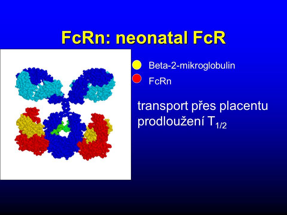 FcRn: neonatal FcR transport přes placentu prodloužení T 1/2 Beta-2-mikroglobulin FcRn