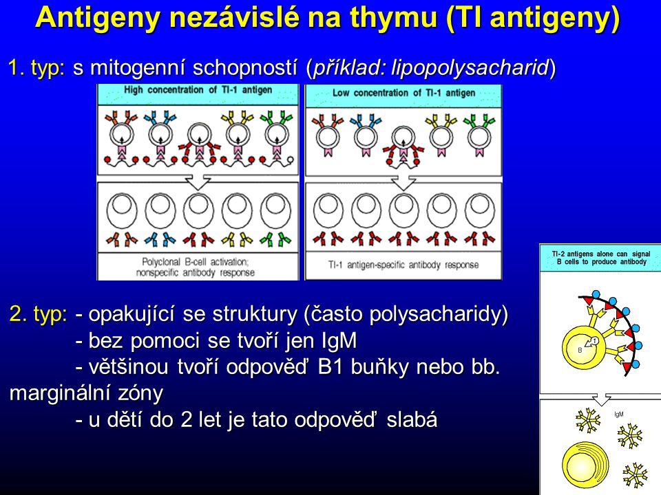 Antigeny nezávislé na thymu (TI antigeny) 2.