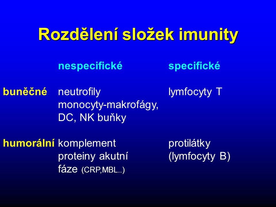 B lymfocyty - vývoj