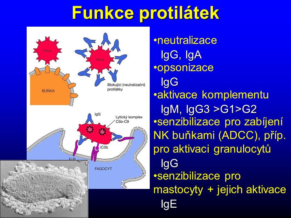 Funkce protilátek neutralizace opsonizace aktivace komplementu senzibilizace pro zabíjení NK buňkami (ADCC), příp.