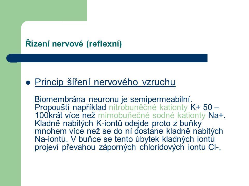 Řízení nervové (reflexní) Umožňují ho specializované buňky – neurony. Změny vnějšího nebo vnitřního prostředí – podněty – zaznamenávají specializované