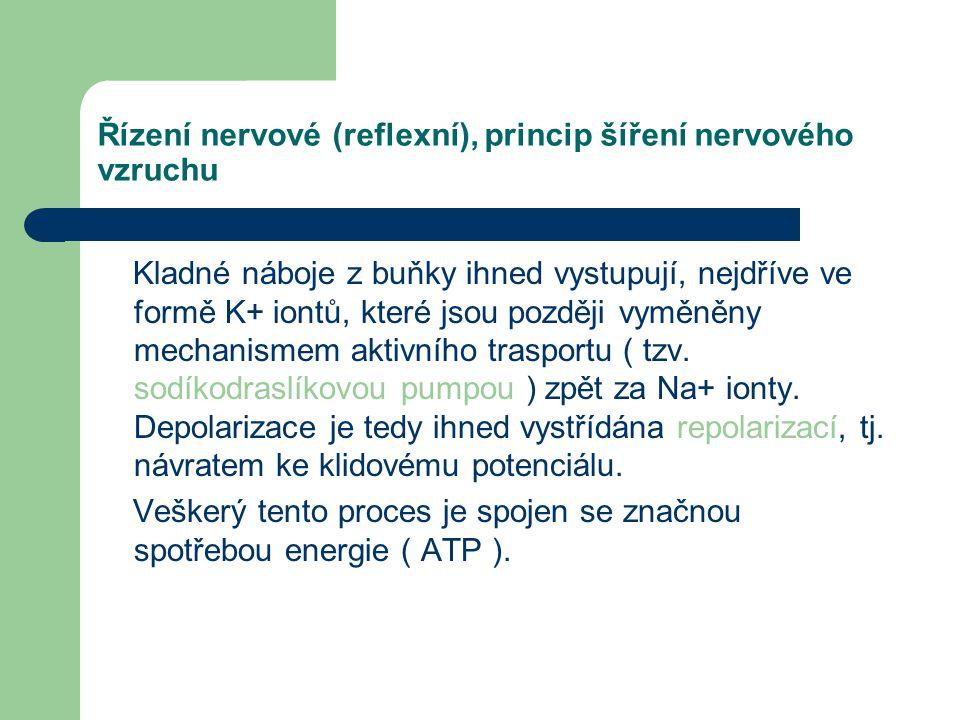 Řízení nervové (reflexní), princip šíření nervového vzruchu Biomembrána proto odděluje dvě prostředí s rozdílným elektrickým nábojem a převaha záporný