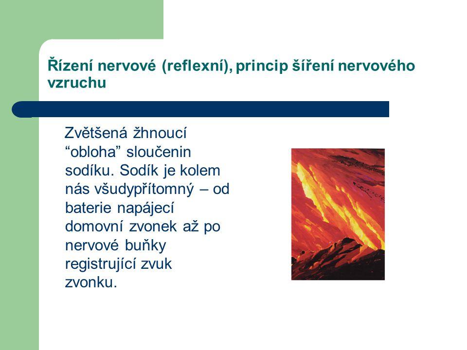 Řízení nervové (reflexní), princip šíření nervového vzruchu Kladné náboje z buňky ihned vystupují, nejdříve ve formě K+ iontů, které jsou později vymě
