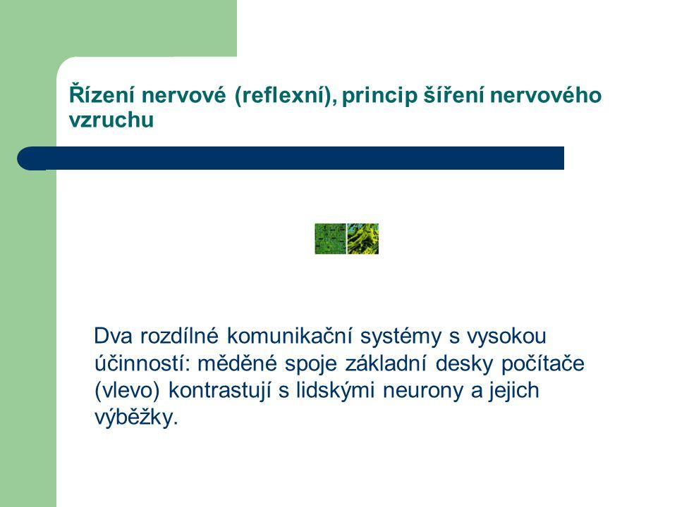 Řízení nervové (reflexní), princip šíření nervového vzruchu Budeme-li dráždit nervové vlákno elektrickým proudem, snadno zjistíme, že akční potenciál