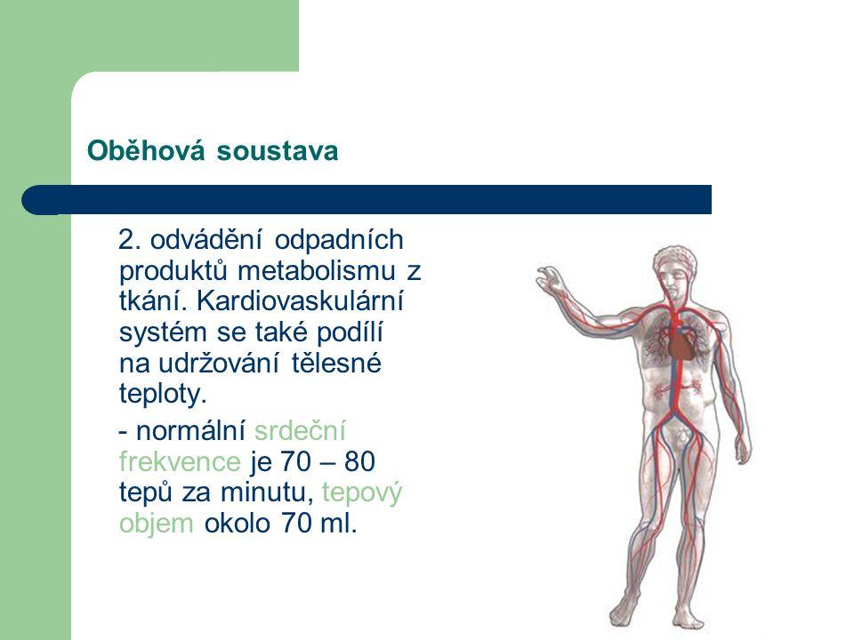 Oběhová soustava Kardiovaskulární systém se skládá ze dvou základních oddílů: centrálního (srdce) a periferního (krevní cévy). Jejich úkolem je: 1. zá