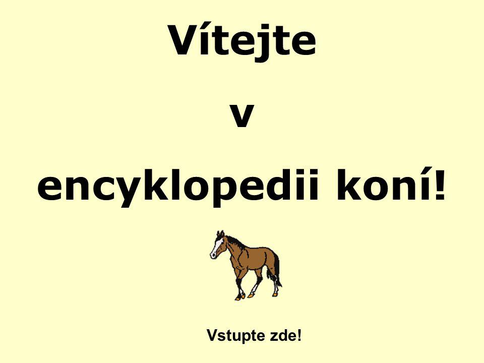 Vítejte v encyklopedii koní! Vstupte zde!