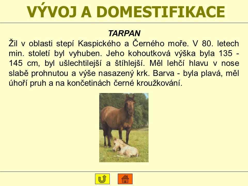 VÝVOJ A DOMESTIFIKACE KERTAK Dodnes žije ve stepích Dálného Východu Střední Asie a v zoologických zahradách. Jeho kohoutková výška je 130 - 140 cm, má