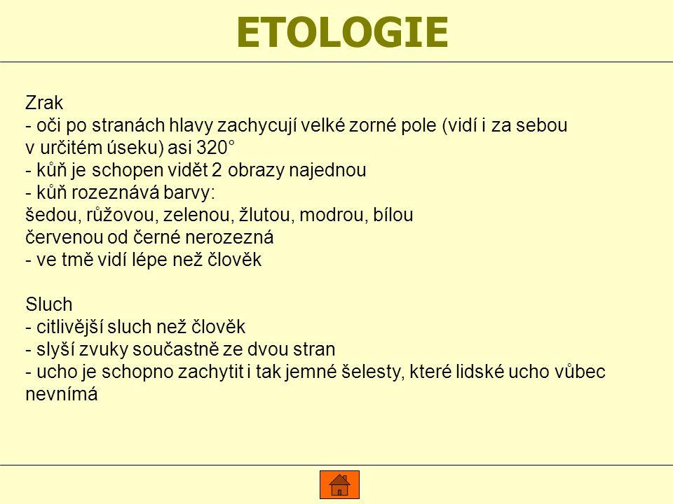 ETOLOGIE Zrak - oči po stranách hlavy zachycují velké zorné pole (vidí i za sebou v určitém úseku) asi 320° - kůň je schopen vidět 2 obrazy najednou - kůň rozeznává barvy: šedou, růžovou, zelenou, žlutou, modrou, bílou červenou od černé nerozezná - ve tmě vidí lépe než člověk Sluch - citlivější sluch než člověk - slyší zvuky součastně ze dvou stran - ucho je schopno zachytit i tak jemné šelesty, které lidské ucho vůbec nevnímá