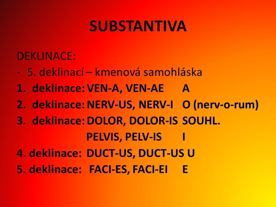 ADJEKTIVA -shoda s příslušným substantivem (shodný přívlastek) rod číslo pád - skloňování podle prvních tří deklinací