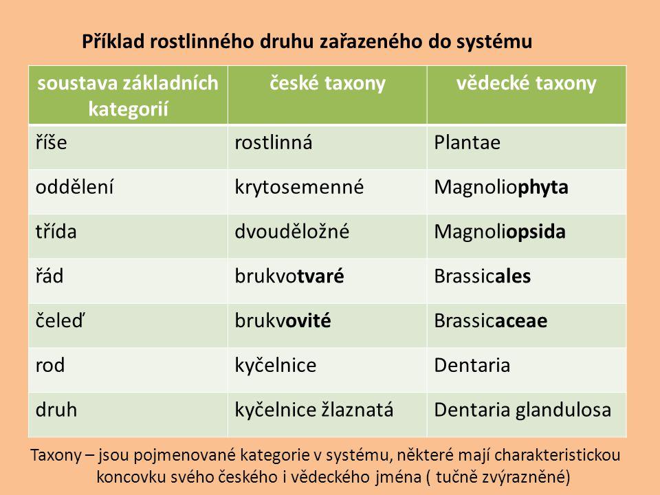Příklad rostlinného druhu zařazeného do systému soustava základních kategorií české taxonyvědecké taxony říšerostlinnáPlantae odděleníkrytosemennéMagn