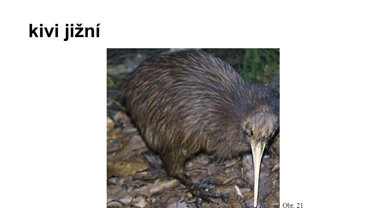 Běžci znaky – mohutné tělo, dlouhý krk, malá hlava - zakrnělá křídla  nelétají - silné nohy  rychlý běh - nekrmiví zástupci: pštros dvouprstý (Afrika) nandu pampový (J.