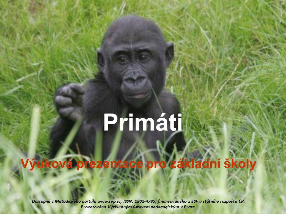 12 Systém primátů Poloopice Vyšší primáti (opice) - širokonosí primáti (malpy, chápani, vřešťani) - úzkonosí primáti (kočkodani, paviáni, makakové) Lidoopi giboni, orangutani, šimpanzi, lidé